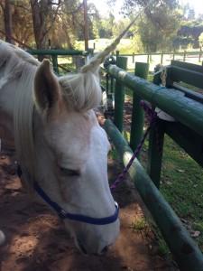 horse carer2